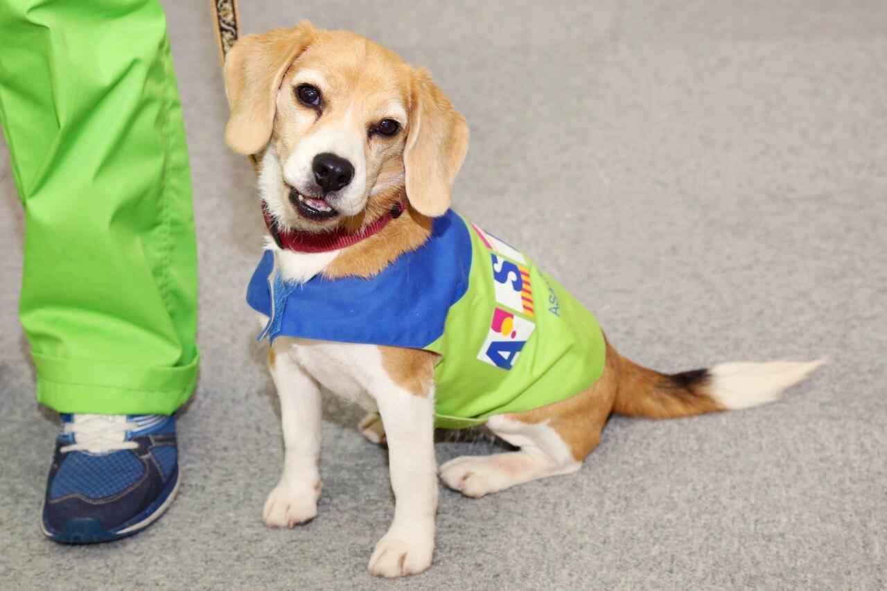 今年は戌年! 社会で活躍する職業犬/日本の家屋を守る探知犬チーム「くんくんズ」