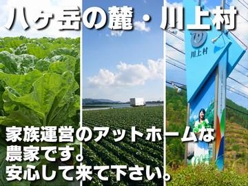 遠藤洋菜園(えんどうようさいえん)のアルバイト情報