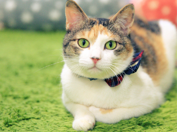 保護猫カフェ ネコリパブリックのアルバイト情報