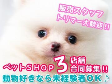 (株)ミッキーアンドゴン ★ペットSHOP3店舗募集★のアルバイト情報