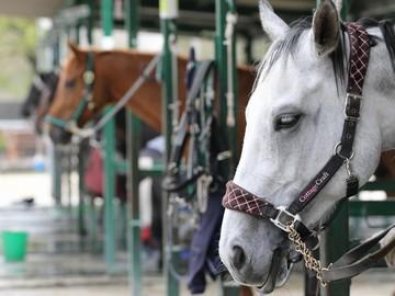 株式会社乗馬クラブクレイン 乗馬クラブクレイン倉敷のアルバイト情報