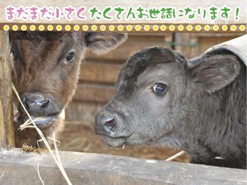 神戸畜産(株) 和歌山牧場・氷上牧場のアルバイト情報