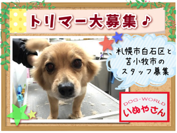 DOG WORLD いぬやさんのアルバイト情報
