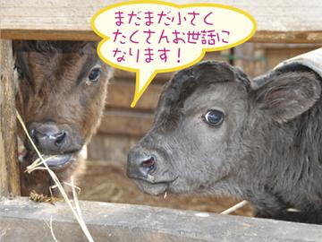 藤本畜産(株) 霧島牧場・宮崎尾崎牛肥育牧場のアルバイト情報