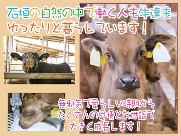株式会社八重山石垣牧場のアルバイト情報