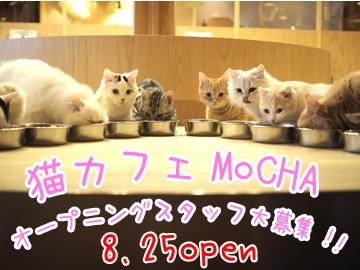 猫カフェ MoCHA 名古屋栄店のアルバイト情報