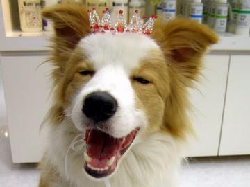 (有)バウアイズ <ペッツワン古川店・Cafe&DogsBOWEYES>のアルバイト情報